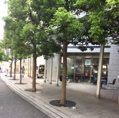 カジノスクールへの道5 街路樹